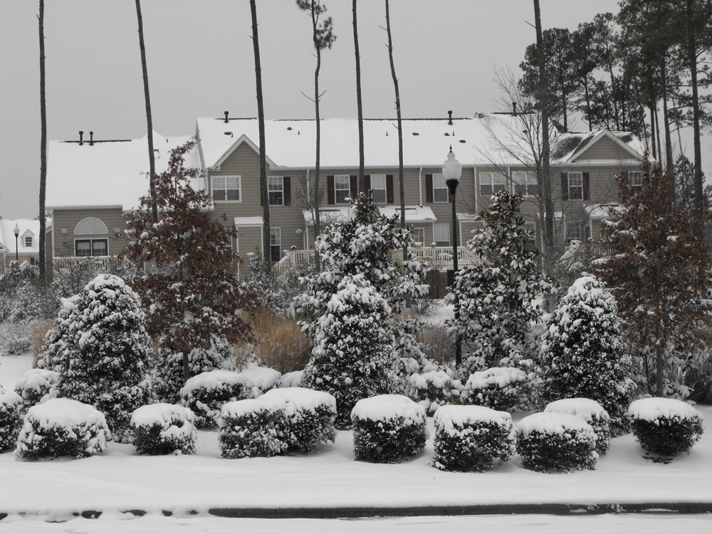 Cary Snowstorm
