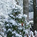 snowy shrub
