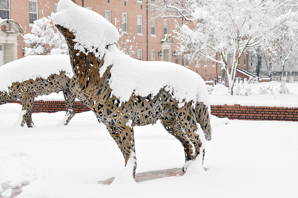 NCSU wolfpack snow