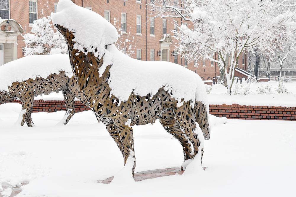 NCSU wolfpack snow