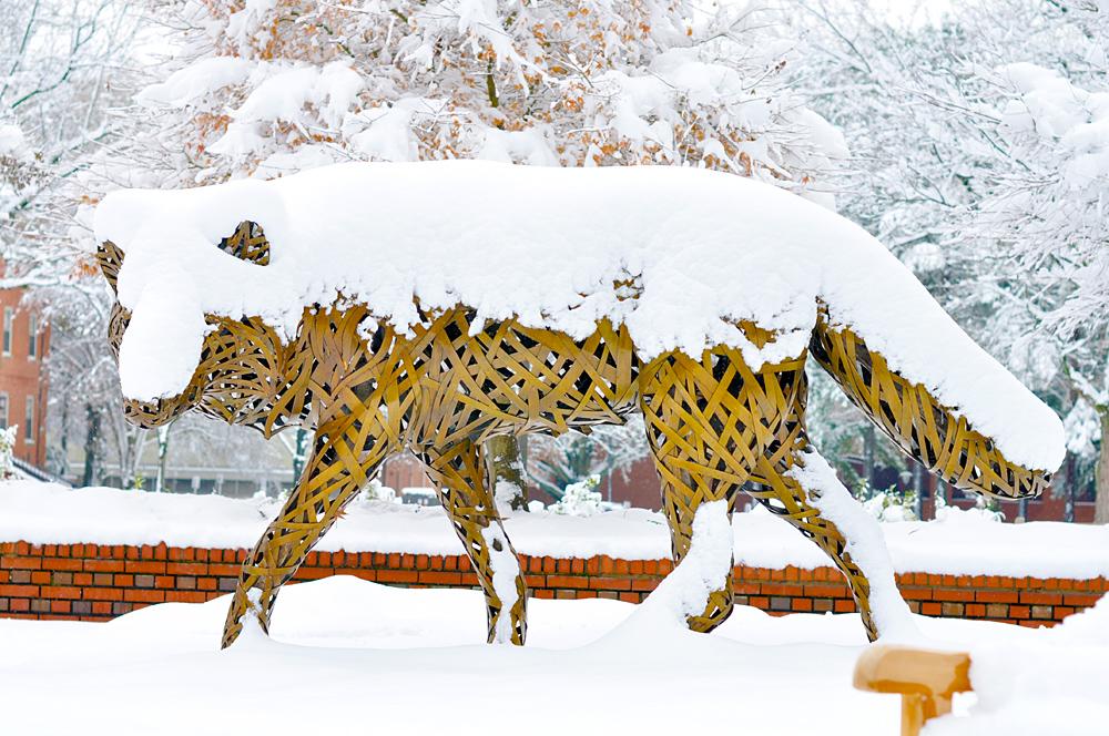 NCSU wolfpack snowy